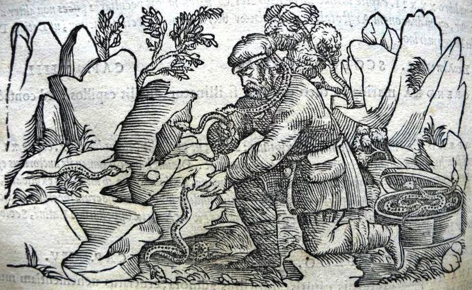 Triaca Magna