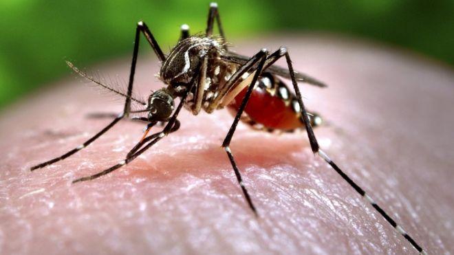 Zika bbc
